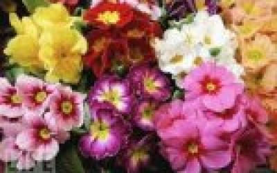 Pavasara tirgus Aknīstē